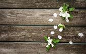 Apple flowers on wooden board — Foto de Stock