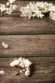 Cherry flowers on wooden board — Stock Photo