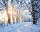 Winter road with sunlight — Fotografia Stock