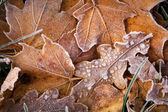 Leaves on the ground covered with ice — Stock Photo