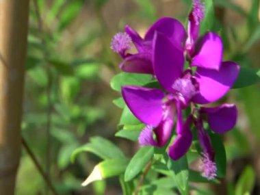 Garden flowers — Vídeo de Stock