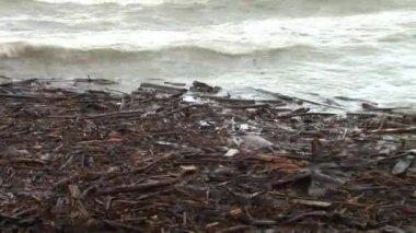 Die Wellen an Land gespült Baumstämme und Äste in einem Sturm im Schwarzen Meer — Stockvideo