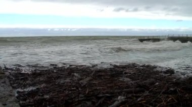 The waves washed ashore tree trunks and branches in a storm in the Black Sea — Stok video