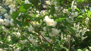 Subtropical plants arboretum Sochi, Caucasus, Russia — Stock Video