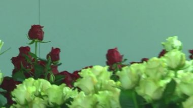 Greenhouse production rose cultivation. — Stock Video