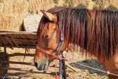 Konie w stajni. — Zdjęcie stockowe