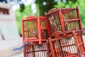 Bird in a Cage. — Stock Photo