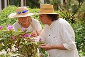Senior couple examine rhododendron flowers — Stock Photo