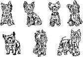 Yorkshire terrier, portrait, graphics — Stock Vector