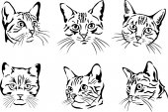 猫、肖像画、グラフィック イメージ — ストックベクタ
