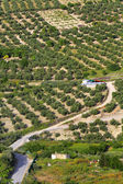Landscape, olive groves, Ubeda, Andalusia, Spain — Stock Photo