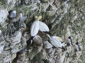 Bempton Bird Sanctuary — Stock Photo