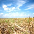 Mown field of wheat — Stock Photo #69352843