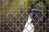 Monkey Cage — Stock Photo