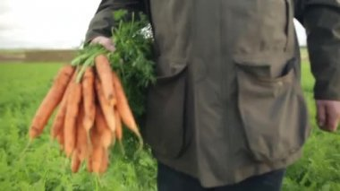 Man walking in a field with a bunch of carrots — Stock Video