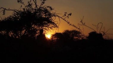 Sunrise in Africa, Tanzania with the Maasai Mara, Taveta, Kenya, March 2013 — Vidéo