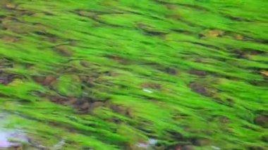 řeka, lesní — Stock video