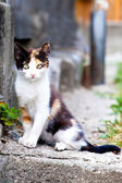 Portrait of a beautiful cat — Stock Photo