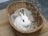White rabbit and easter willow in basket — Stock Photo