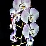 Beautiful raceme of light pink Phalaenopsis orchid flowers — Stock Photo #69200355