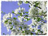 Imitation of oil painting of blooming boughs of pear-tree — Stock Photo