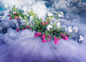 Pink and white flowers in clouds — Stock Photo