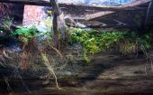 Ruins of shabby building covered by vegetation — Stock Photo
