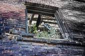 Window opening covered by vegetation in brick wall — Stock Photo