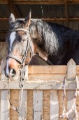 Il cavallo nella stalla — Foto Stock