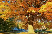 Fall explosion — Stock Photo