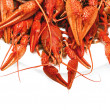 Red boiled crawfish on a white background — Stock Photo #70004035