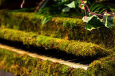 Green moss piano — Stock fotografie