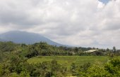 Rice field. Bali, Indonesia — Stock Photo