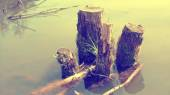 Rotting log in the water — Stock Photo