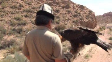 Eagle hunter brings trained eagle back home — Stock Video