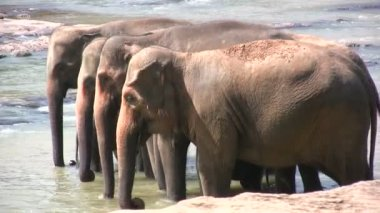 Elephants standing in river — Stok video