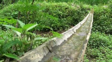 Bamboo irrigation channel — Stock Video