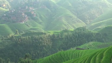 Rice terraces in China — Stock Video