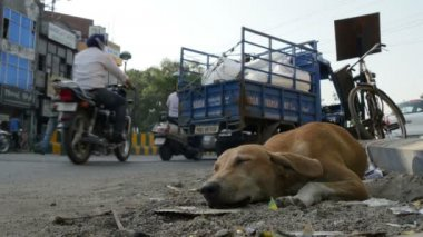 A stray dog sleeps on a busy road — Stock Video