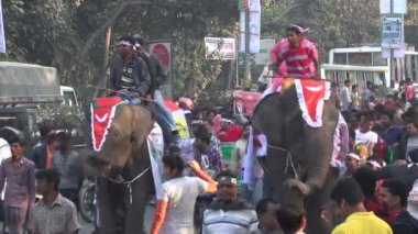 People take elephants through the streets — Stock Video