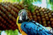 Macaws bird — Stock Photo