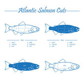 Atlantic salmon cuts diagram — ストックベクタ