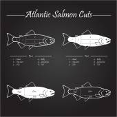 Atlantic salmon cuts diagram — Stock Vector
