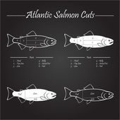 Atlantic salmon cuts diagram — Vector de stock
