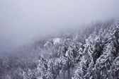 Snow covered mountainside forest disappearing in fog — Stock Photo