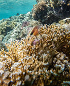 Red sea coral reef — Stock Photo