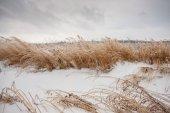 Zamrzlé trávě — Stock fotografie