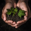 Hands holding seedling take care of new development — Stock Photo #69162771