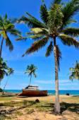Abandon Shipwreck under coconut tree — Zdjęcie stockowe