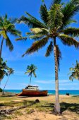 Coconut tree and abandon shipwreck — Zdjęcie stockowe